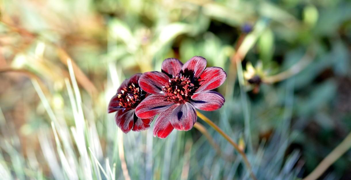 wyrażanie wdzięczności, kwiat Empathic Way